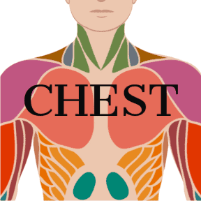 Video for Chest Exercises